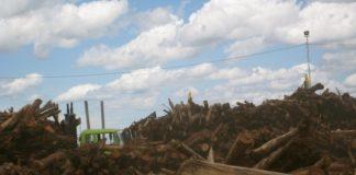 Man-made deforestation underway in Garhi Chandan, Peshawar