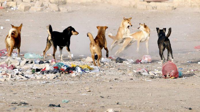 Rabid dogs bite 14 people in Shangla district of KP