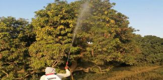 NDMA clears 524,500 hectares of land from locusts