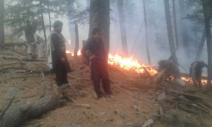 Abbottabad forest fire doused after dozens of trees gutted