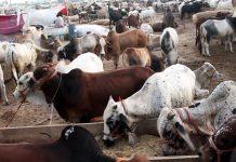 Cattle markets to operate from 6am to 7pm: NCOC