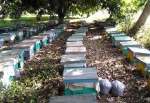Pakistan's massive plantation drive boosts honey production