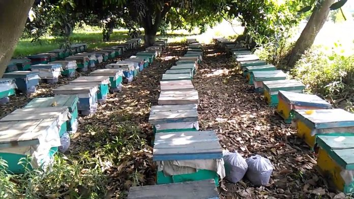 Pakistan's massive plantation drive boosts honey production